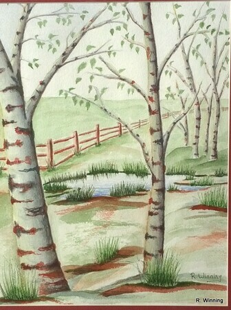 Birches  by       Rod Winning